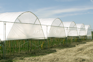 Serra Poly Tunnel